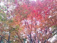 紅葉トリム.jpg